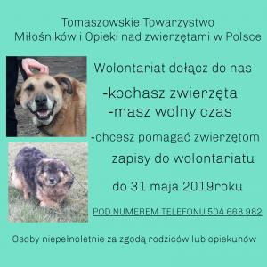 Wolontariat - Tomaszowskie Towarzystwo Miłośników i Opieki nad Zwierzętami w Polsce